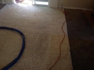 San_Jose-Traffic-Area-carpet-cleaners